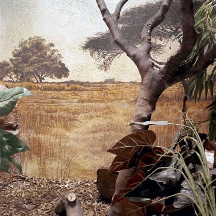 http://www.davidoshaughnessy.com/files/gimgs/th-8_zoo 26 DUBLIN LAB_v2.jpg