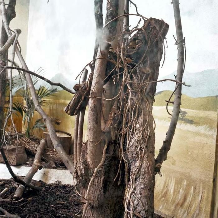 http://www.davidoshaughnessy.com/files/gimgs/th-8_zoo 29 DUBLIN LAB copy_v2.jpg